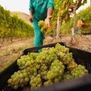 50-50 policy upskilling farm workers