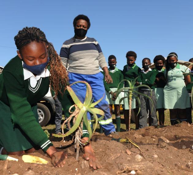 Coega helps primary school with indigenous garden