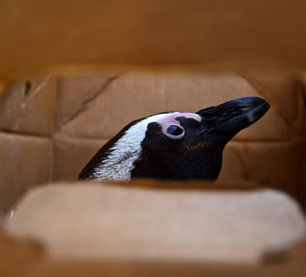 Ford Wildlife Foundation supports Gqeberha's penguins