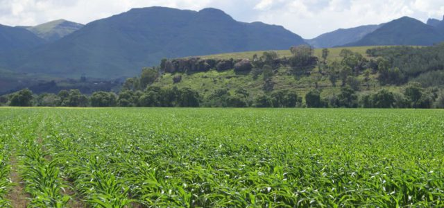 Matatiele farming community to celebrate successful first harvest