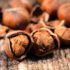 Eastern Cape positions itself as hazelnut hub
