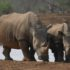 Minister welcomes arrest in rhino case