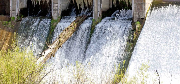 Amatola Water placed under administration