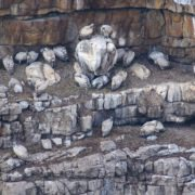Sanral monitors cape vulture colony