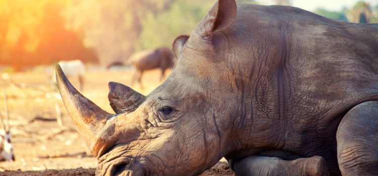 KZN tightens security to curb rhino poaching