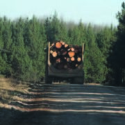 Multimillion forestry investment for Singisi
