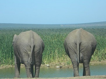 Youth urged to participate in wildlife economy