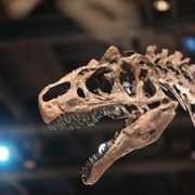 SA scientist unveils ground-breaking fossil discovery