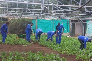 Labour to plough R800m into agriculture