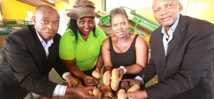 Millions for EC potato producers